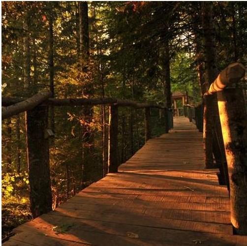 1-nuit-insolite-dans-les-arbres-semaine-et-hors-vacances