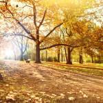 Top activités d'automne
