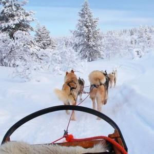husky-tour-en-valais-1-pers