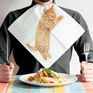 serviettes-chats